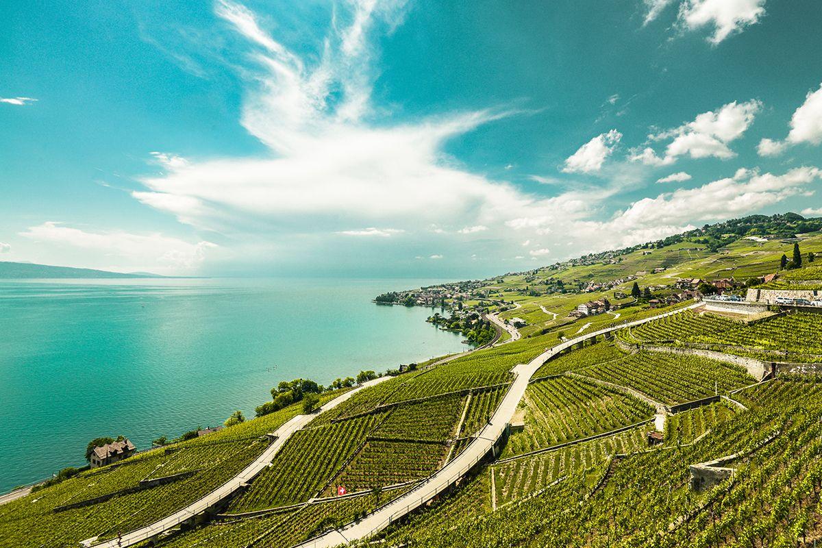 Lavaux vineyard
